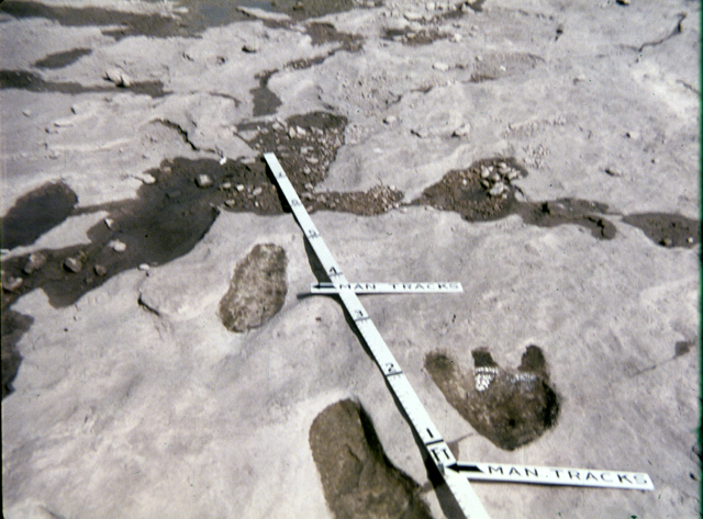 Dino and human tracks in the same sediment level(pertrified)